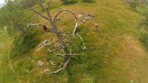 flyin_over_tree